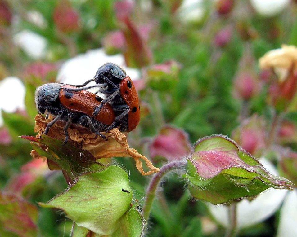 Photos d'insectes et d'araignées généralement en macro