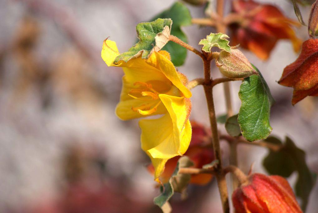 Fleurs et fruits saisis dans le jardin de mon amie Jacquie... Un très beau jardin, comme vous pouvez le constater !!
