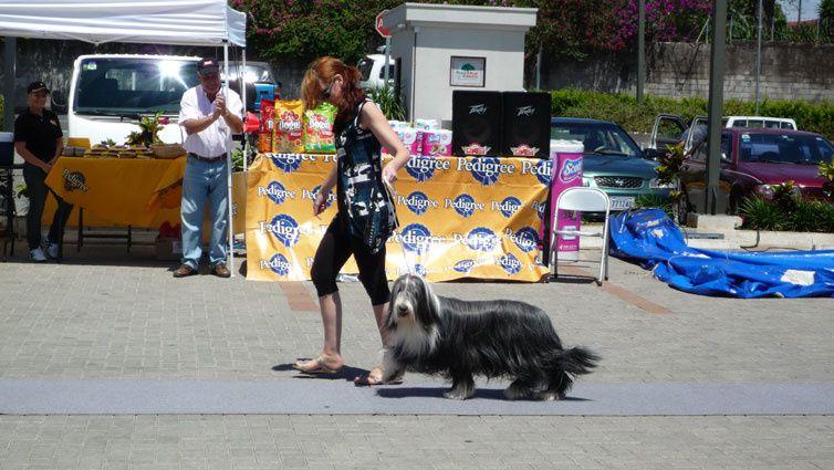 Album - Feria-Canina