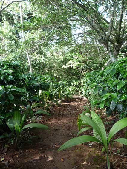 The secret garden of TACACORI EcoLodge