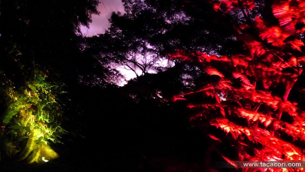 La magie de Noël à TACACORI EcoLodge, ou un jardin de lumière