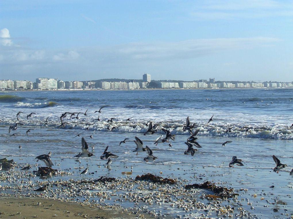 La plage de La Baule et de Pornichet hors saison.