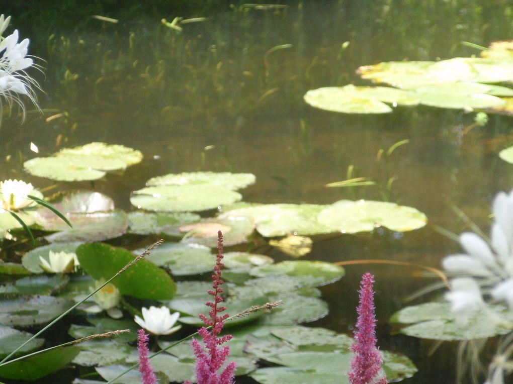 Il s'agit d'une ballade l'été dans les jardins de GIVERNY.