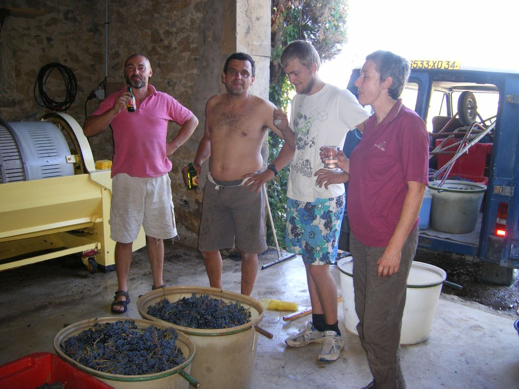 Album - vinification-sept.-2010