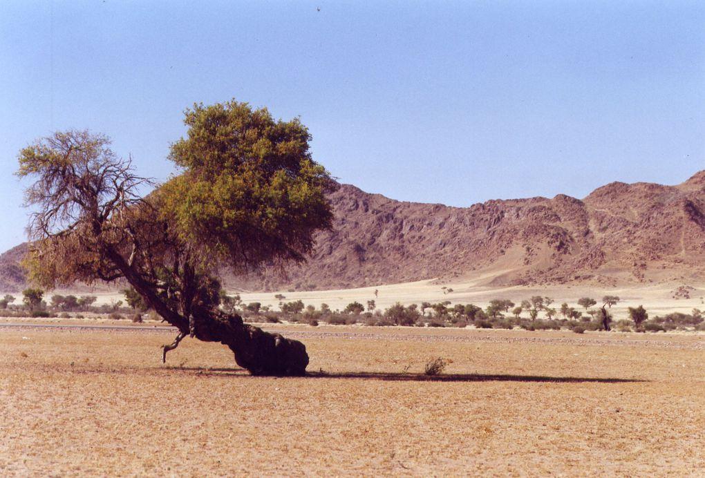 Album - Namibie - Sept 2010