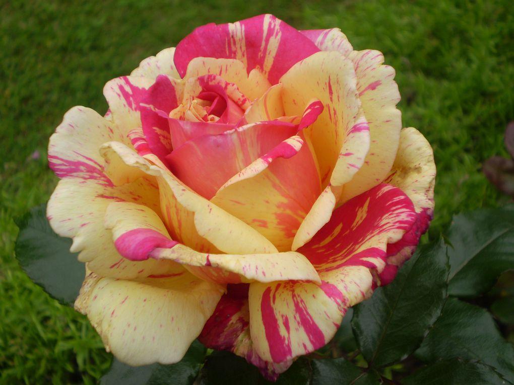 Album - Fleurs-de-mon--jardin