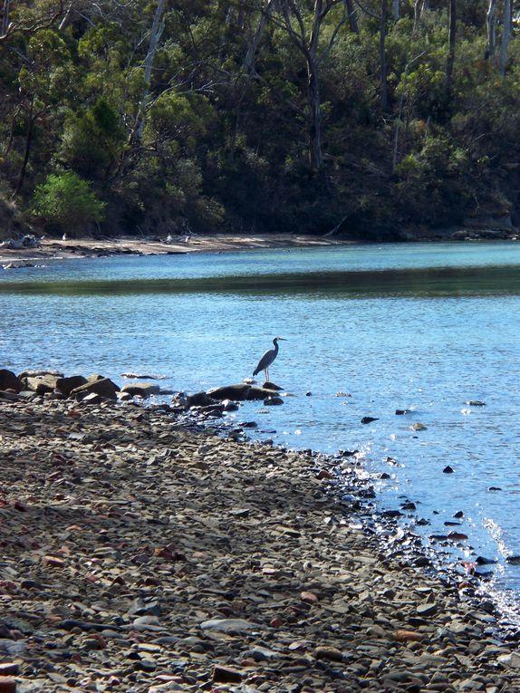 La faune Tasmanienne rencontree, des insectes aux mammiferes en passant par les oiseaux... Droles de betes!