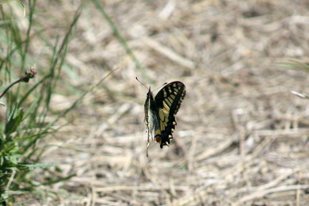 Album - Fleurs-et-Papillons