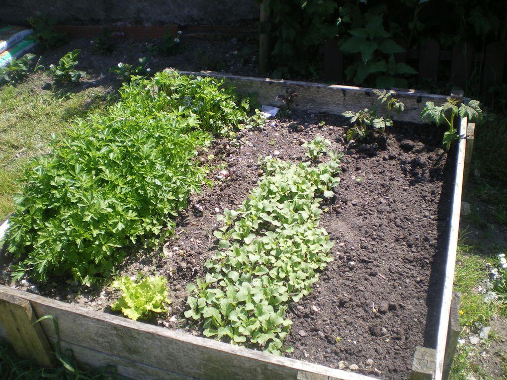 quelques petits legumes de saison .