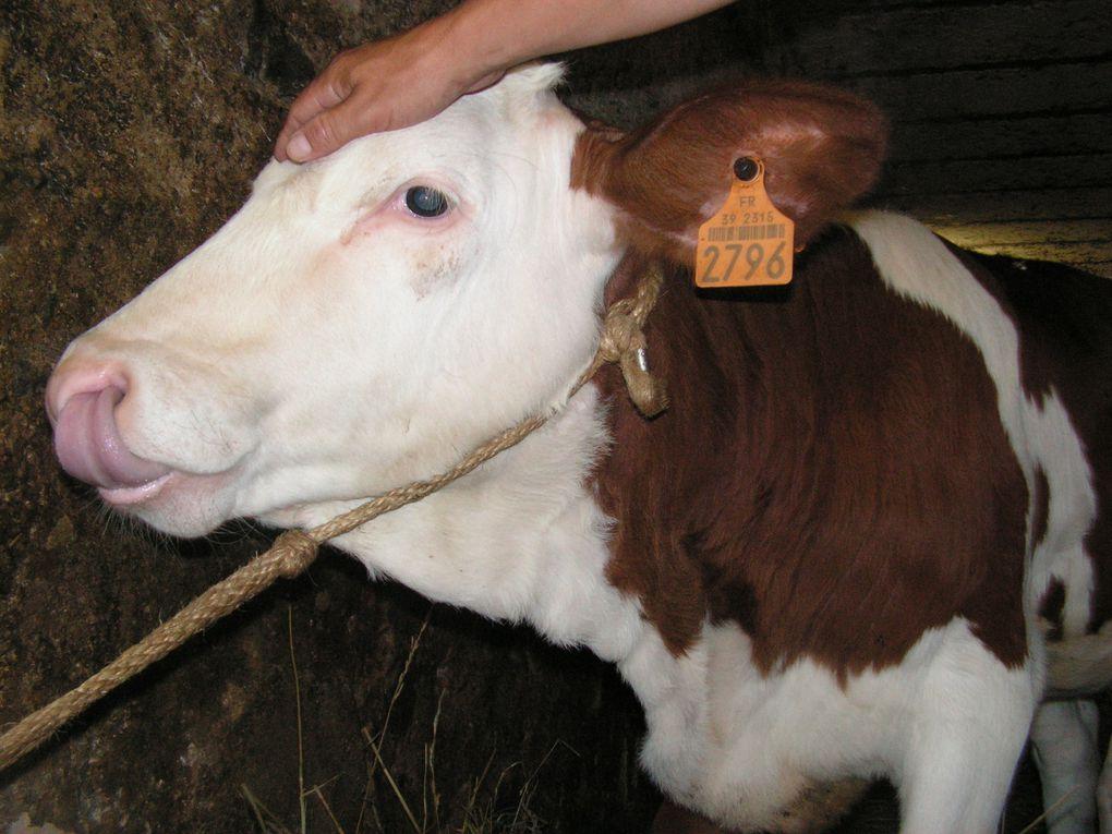Album - animaux de ferme d helene-2009