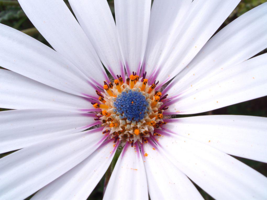 Album - Florilege