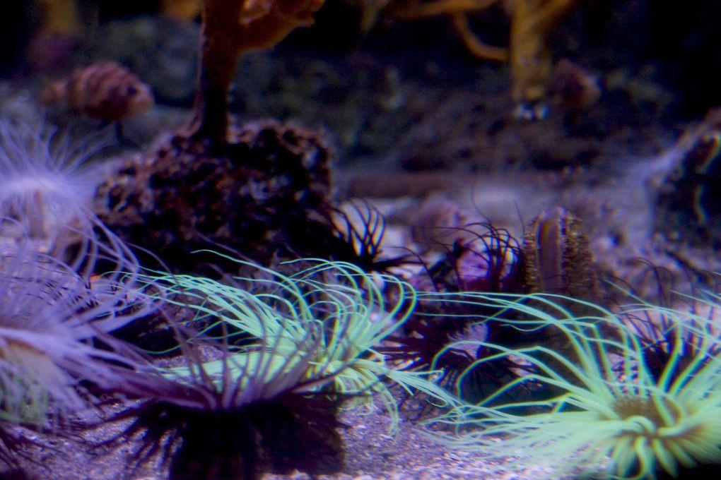 une visite express à l'aquarium de La Rochelle au printemps 2008. Photographie sans flash et sans trépied, de récifs, de poissons et d'invertébrés marins.