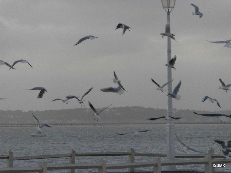 certaines images ne sont pas recadrées volontairement, les ailes coupées du corps de l'oiseau, un bec, une aile dans un angle donne l'impression qu'un motif (avec un nuage de points =mouettes disséminés sur la photo) a été dessiné sur la photo