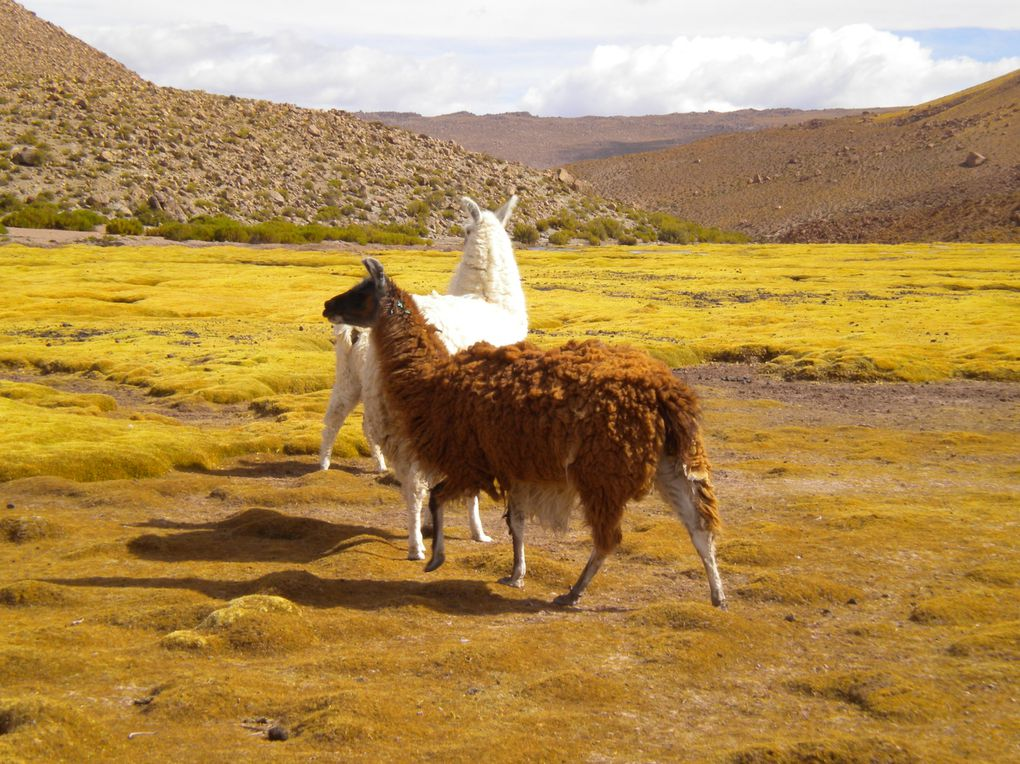 San Pedro de Atacama, Valle de la Luna, Salar de Atacama