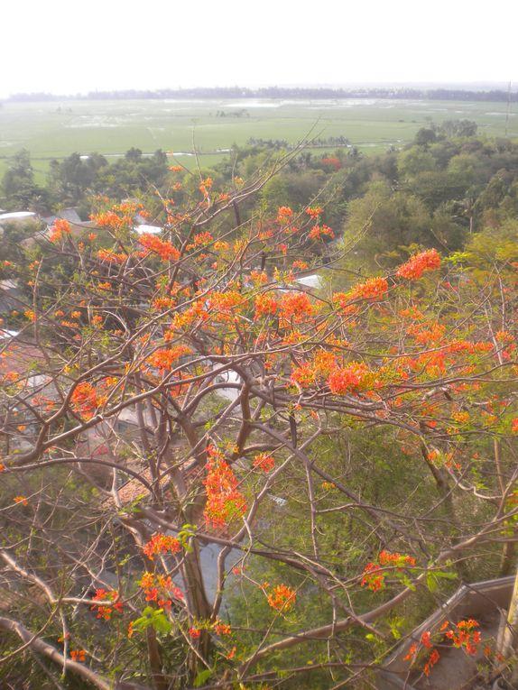Le delta du Mékong (My Tho, Can Tho, Chau Doc)