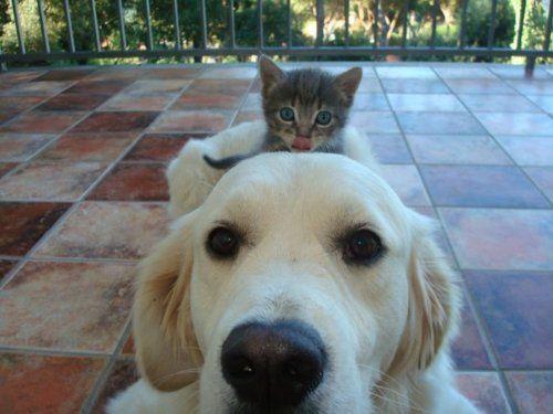 Le chien est le meilleur ami de l'homme. Et pourtant, on se ferait du souci pour un homme dont le meilleur ami serait un chien. Pour trouver une certaine réciprocité dans les sentiments, le chien ou tout autre animal devrait plutôt se tourner ve