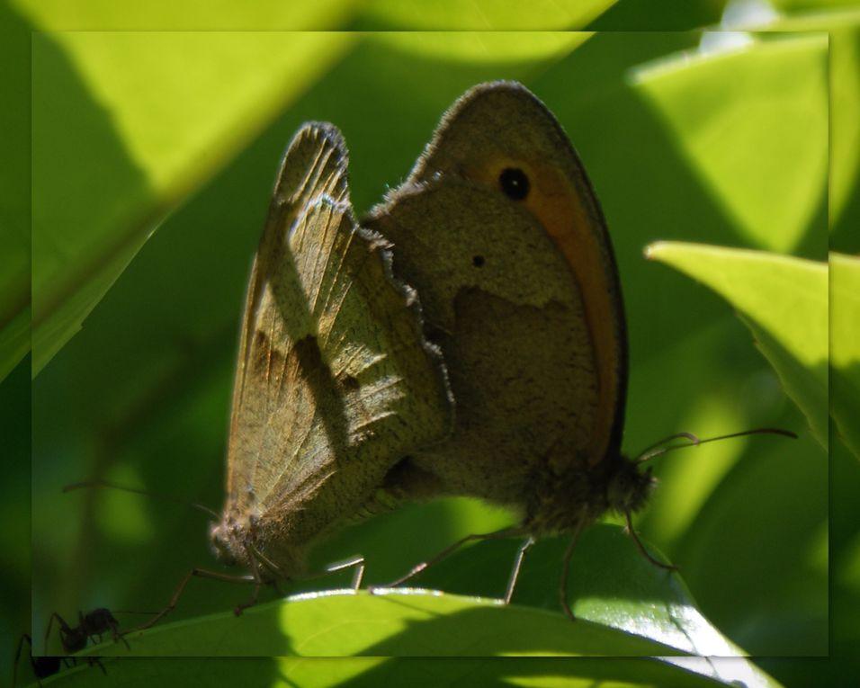 Album - Papillons