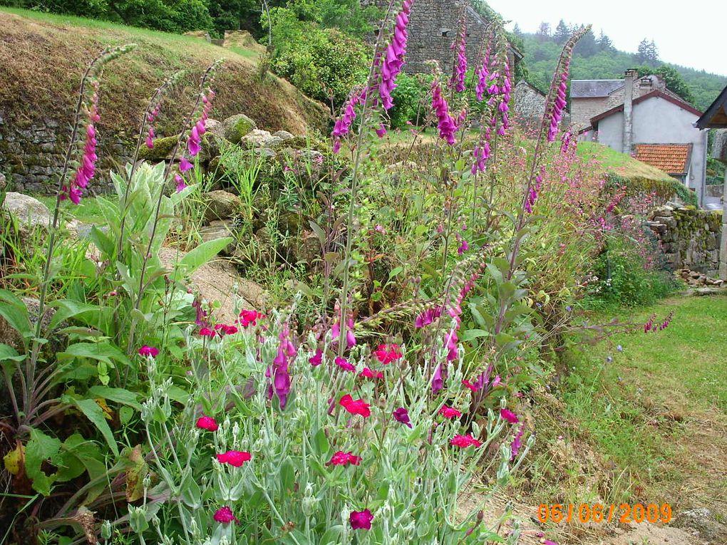 petite promenade à pieds dans Gaudeix , jardins et bois, au fil des saisons