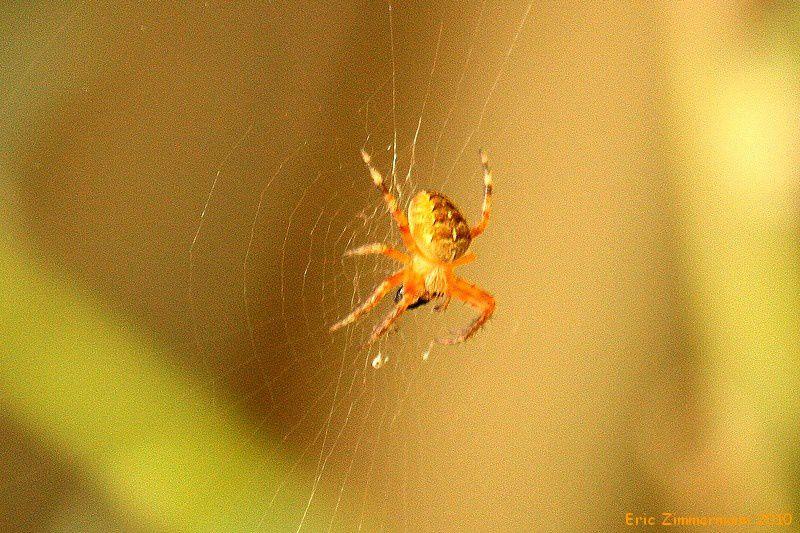 les insectes, araignées, et toutes ces petites bêtes sans lesquelles aucune vie n'est possible