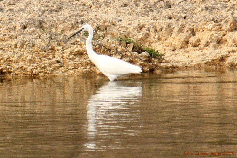 les oiseaux d'eau en liberté