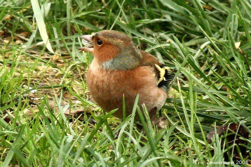 Cette famille comprend un grand nombre d'oiseaux de nos jardins et de nos campagnes. Ils construisent leurs nids dans les buissons, les fourrés et les arbres touffus. Il faut donc leur laisser un coin de jardin complètement sauvage pour enrayer leu