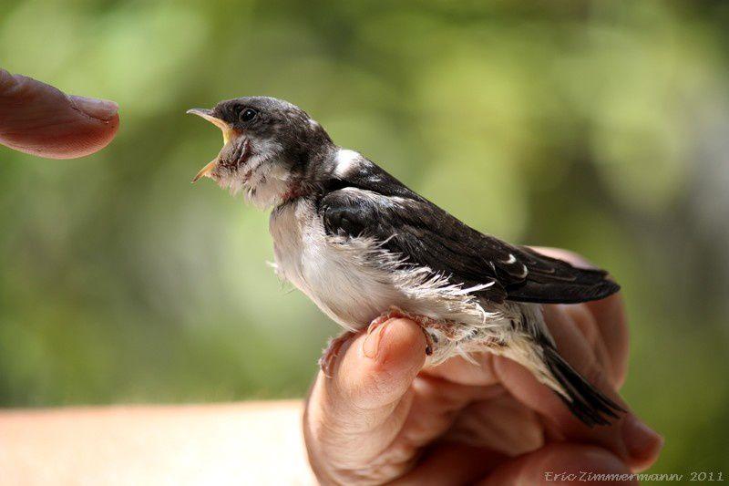 Les oiseaux des jardins: toutes ces photos ont été prises à travers les fenêtres de la maison: vous auriez pu les faire vous-même! La nature est encore assez riche pour nous laisser  un espoir, même si la plupart de ces oiseaux sont menacés.