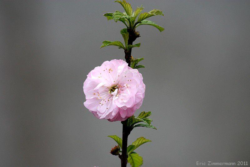 les plantes et les fleurs du jardin, sauvages ou cultivées, nous montrent que la beauté est partout, il suffit de regarder autour de soi pour la voir