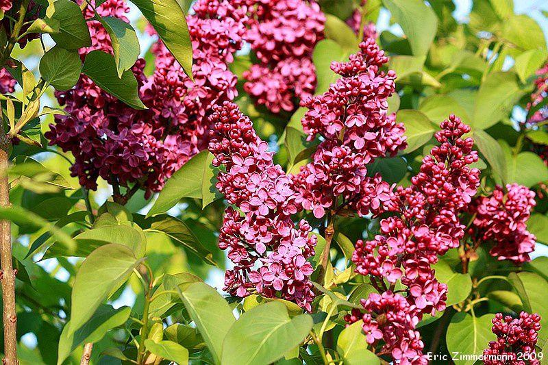 arbustes sauvages et des jardins, une des strates de végétation les plus riches en vie.