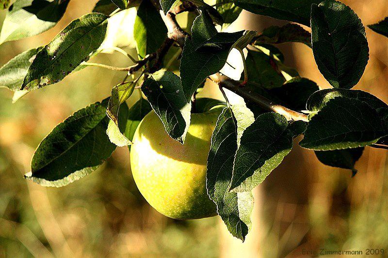 les arbres fruitiers de nos jardins en toutes saisons