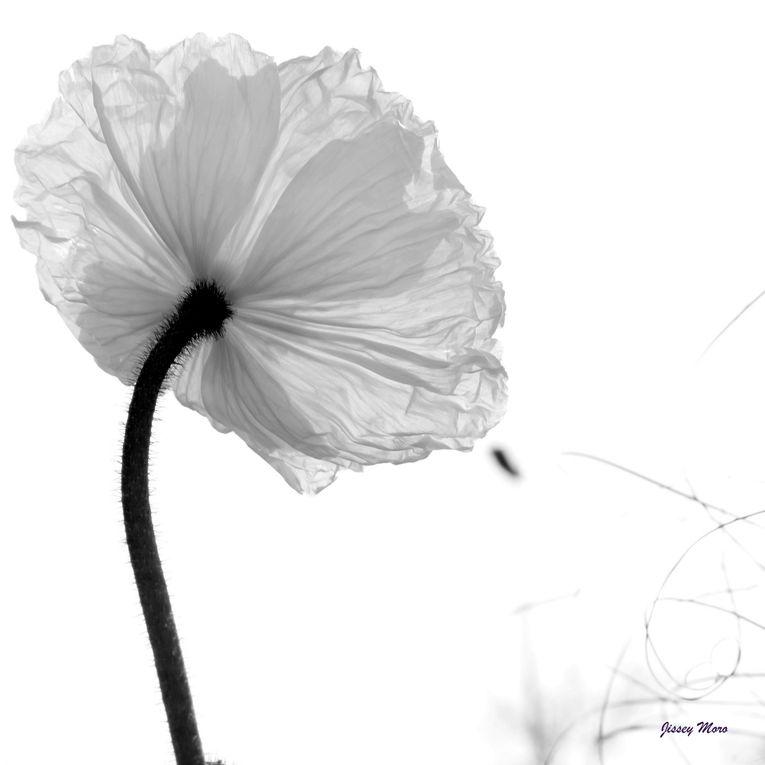 Album - fleurs-en-vrac