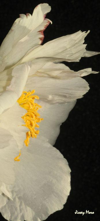rencontre avec cette fleur des jardins charmeuse et multiple