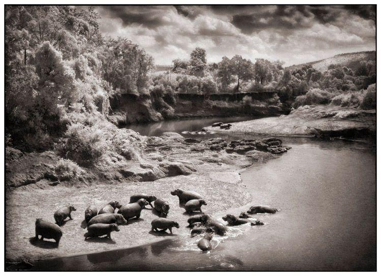 """Voici, en complément de l'article """"l'Afrique au crépuscule"""" du photographe Nick Brandt, (colonne de droite du blog - galerie de dessins) 45 photos parmi les plus belles du livre."""