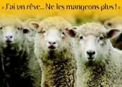ANIMAUX MARTYRS