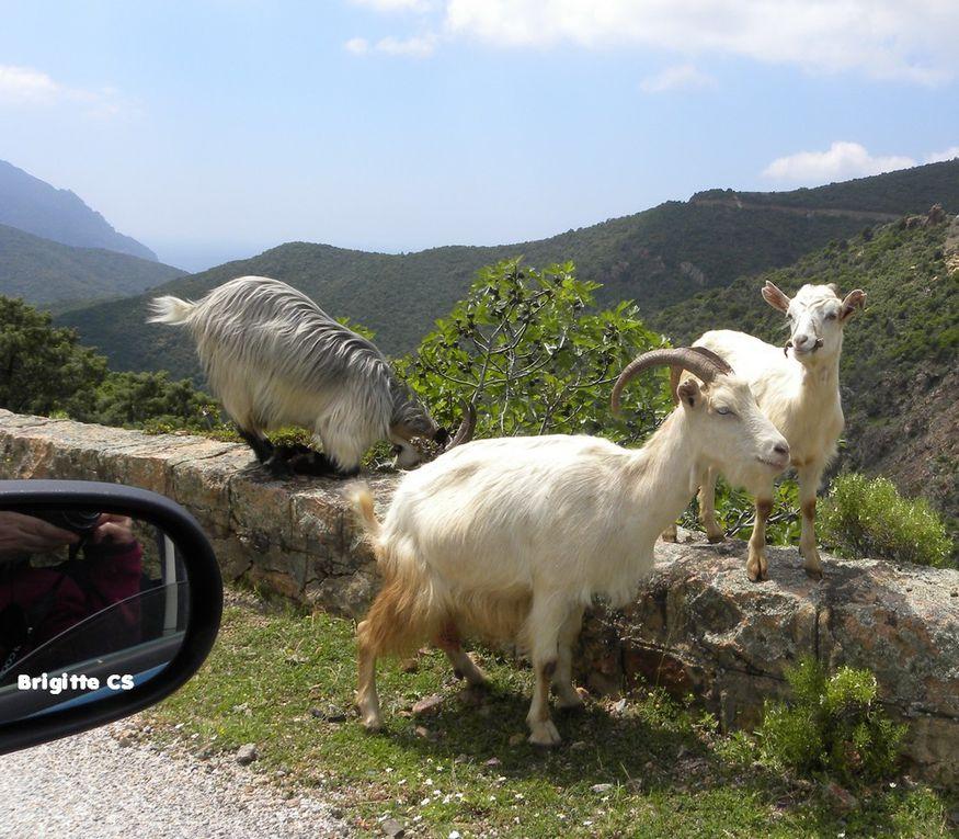 Vacances en Corse du Sud mai 2009