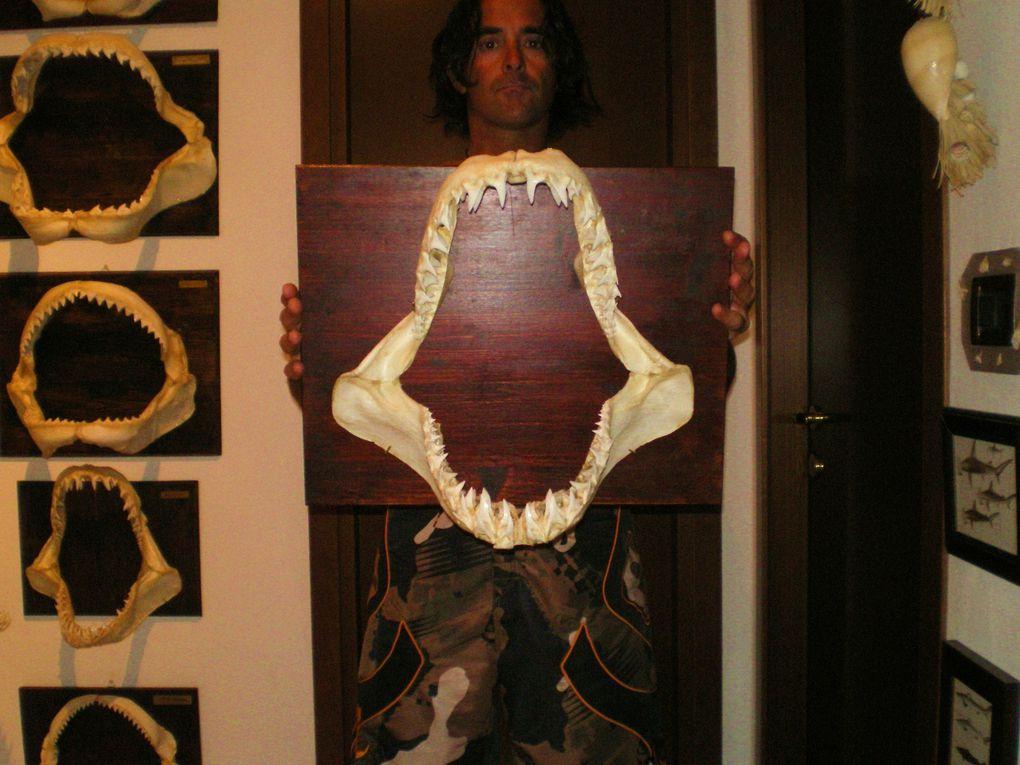 Album - mascelle-squalo
