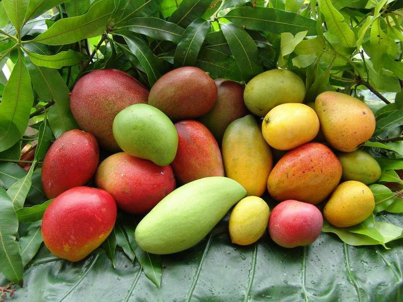 Album - fruits-des-antilles