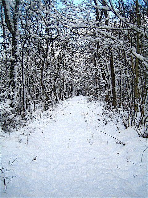Photos prises dans mon village Saussy (Côte d'Or) ou dans la forêt de mon villageLa photographie est un art...