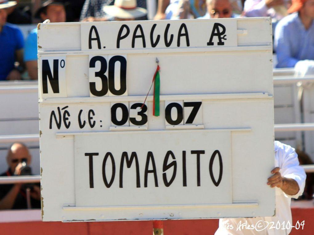 FERIA DU RIZ 2010 A ARLES - Novillada avec 6 novillos de la Ganaderia Antonio PALLA pour Alejandro ENRIQUEZ, TOMASITO et Diego SILVETI&#x3B;