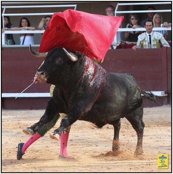 Corrida des Fêtes Arènes du Palio à Istres, Dimanche 5 août 2012 avec 6 toros d'Adélaïda Rodriguez pour David MORA, Arturo SALDIVAR et Thomas DUFAU - Cavalerie BONIJOL