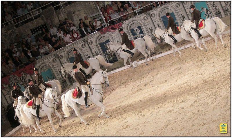 Arènes d'Arles - L'Ecole Espagnole de Vienne (Autriche) les 22,23 et 24 août 2013
