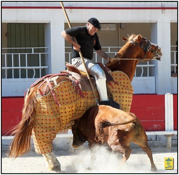Tienta de vacas y toros organisée par le CTPR Los Molinos dans les arènes de Fontvielle le dimanche 18 mai 2014 - Ganaderia Michel Barcelo pour Morenito de Nîmes et Mehdi Savalli accompagnés par Morenito d'Arles - Cavalerie Bonijol