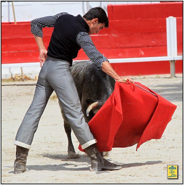 Arènes de Fontvieille dimanche 9 juin 2013-Tienta du CTPR Los Molinos avec 4 vaches des Héritiers e François André pour Moreito de Nîmes, David Lombardo, Mehdi Savalli et Daniel Soto.