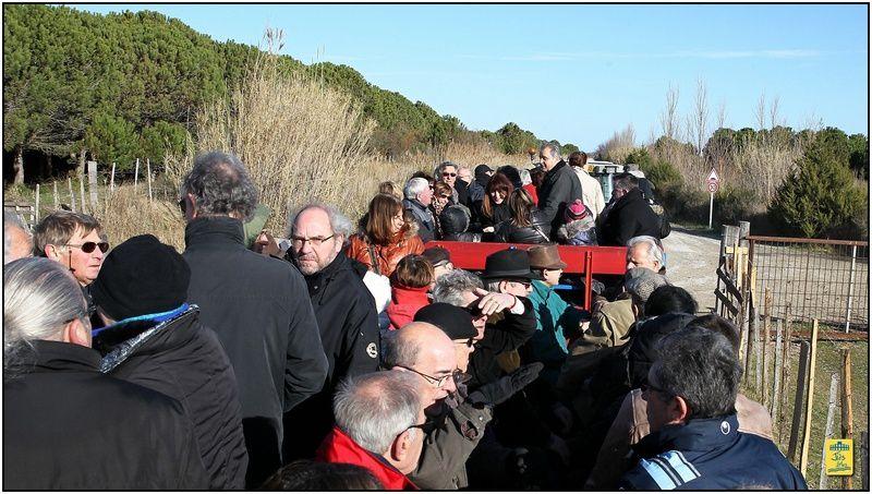 Dimanche 9 février 2014 - Déjeunerau préde La Muleta d'Arles à la Mande Raynaus domaine du Grand Radeau aux Saintes.