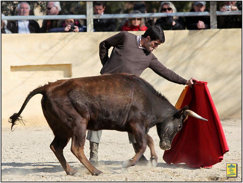 Dimanche 17 février 2013-Ganaderia Turquay-Tienta 4 vaches (2 Gallon/2 Turquay) pour Javier Castaño Organisation UT Nîmoise