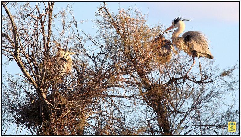 Dimanche 5 janvier 2014 Visite au Parc Ornithologique de Pont-de-Gau aux Sanites-Maries-de-la-Mer Flamands et autres oiseaux