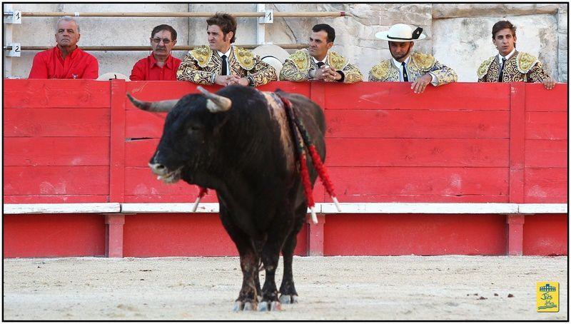"Arènes de Nîmes-Jeudi 13 septembre 2012-17H30-Novillada piquée- 6 Fuente Ymbro pour Fernando ADRIAN, Juan LEAL et ""ROMAN"" Collado-Cavalerie Philippe HEYRAL"