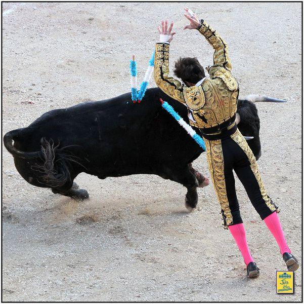 Arènes de Nîmes - Vendredi 17 mai 2013 à 17H30 ... - Toros de Jandilla pour Juan-José Padilla, Juan Bautista et Ivan Fandiño - Cavalerie Heyral