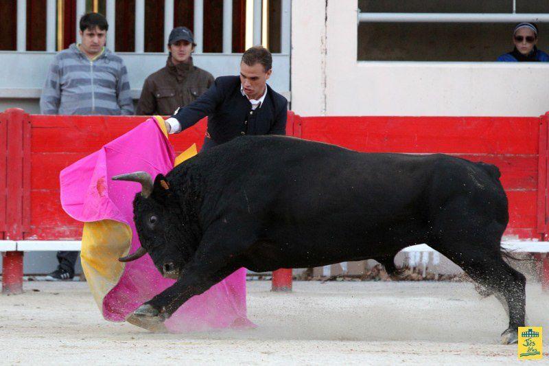 St-Martin-de-Crau Samedi 8 octobre 1011 Journée du Revivre de la Feria de la Crau Tienta de macho et de vacas et Lidia de 4 toros Ganaderias : Giraud-Malaga-Yonnet