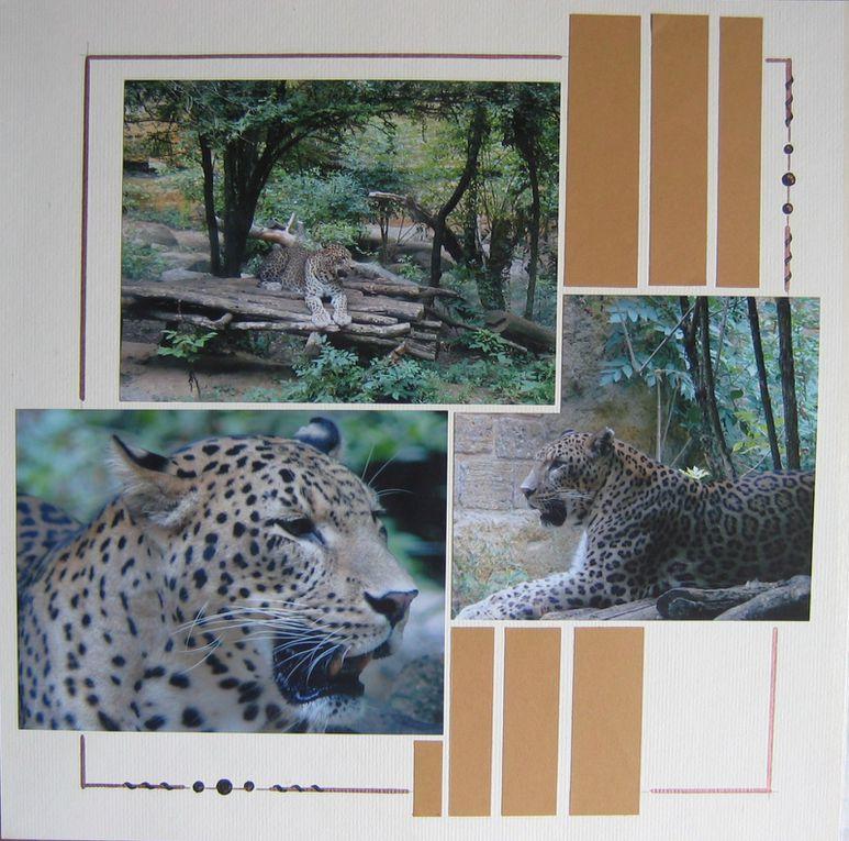 Album - Les-animaux