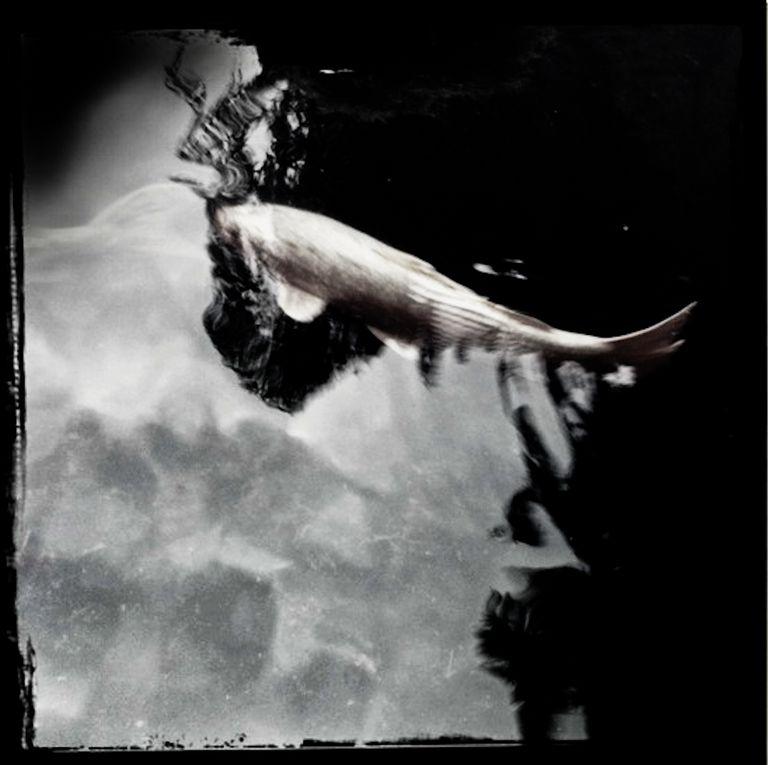 Album - Eloge de l'ombre